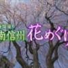 NBS長野放送「春爛漫!!南信州花めぐり」